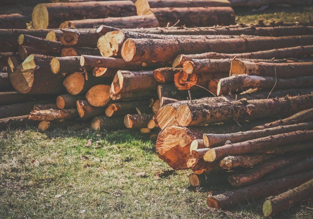 Biomasse Schweiz